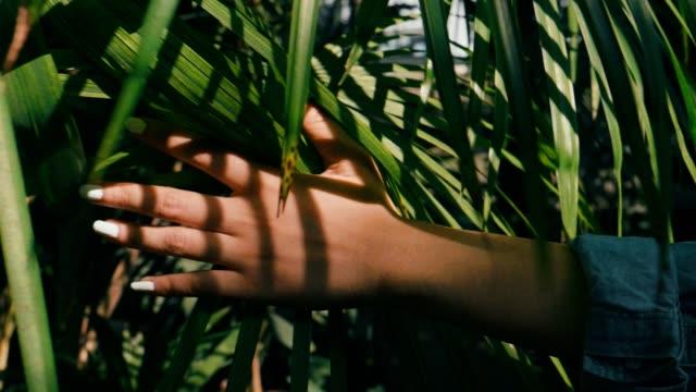 vidéos et rushes de slow motion: main femme toucher feuille verte dans le champ - plante herbacée
