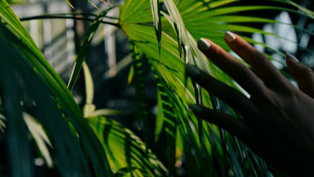 zeitlupe: frau hand berühren grünes blatt im feld - berühren stock-videos und b-roll-filmmaterial