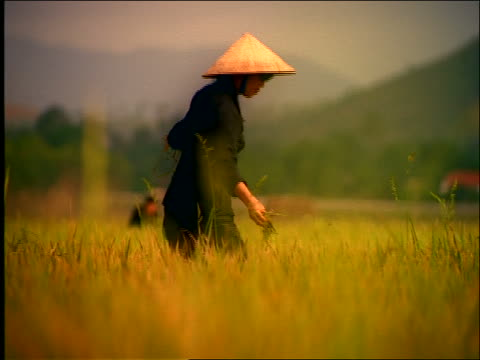 slow motion woman in straw hat working in field / Vietnam