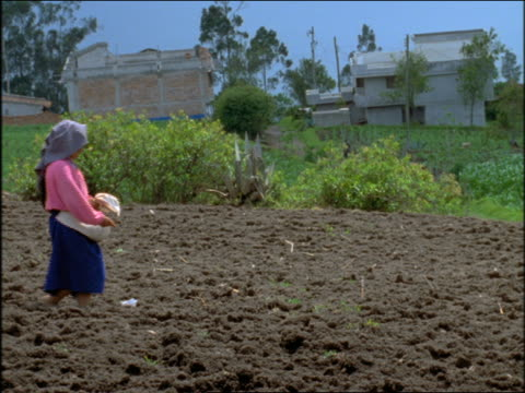 slow motion woman sowing seeds in field / otavalo, ecuador - ecuadorian ethnicity stock videos & royalty-free footage
