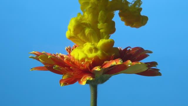 stockvideo's en b-roll-footage met slow motion gele inkt drop in de bloem. - bloemhoofd