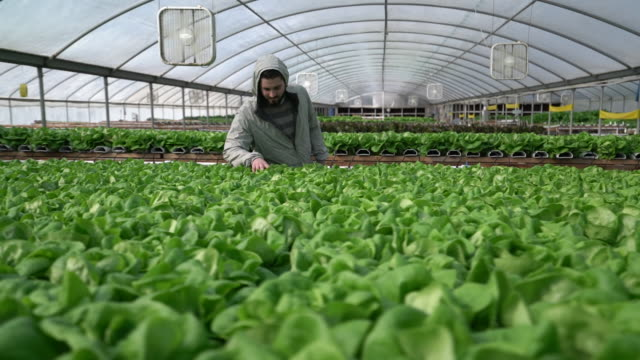 WS Slow Motion Young man growing vegetables in a nursery
