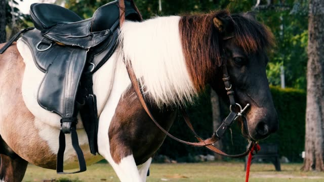 vídeos de stock e filmes b-roll de slow motion : young ponny horse standing on the meadow - pelagem de animal
