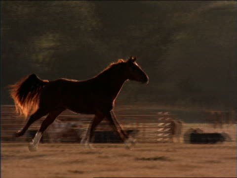 slow motion pan zoom out horse running in field with mountains in background / texas - 草食性点の映像素材/bロール