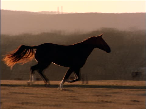 slow motion PAN zoom out horse running in field with mountains in background / Texas