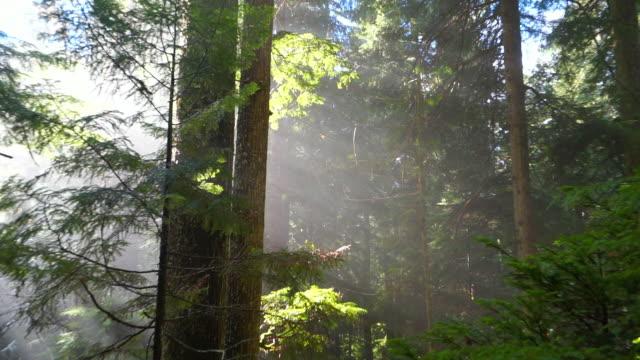 slow motion zoom out shot of snowfall on green trees in woodland at garibaldi provincial park during sunny day - cheakamus lake, british columbia - garibaldi park stock videos & royalty-free footage
