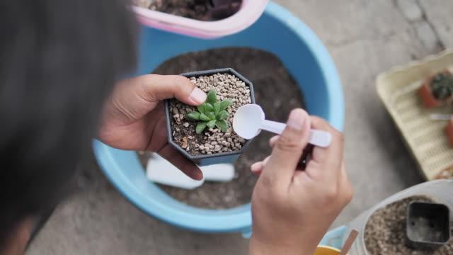 vidéos et rushes de slow motion : collecteur asiatique de cactus d'homme plantant l'arbre vert dans le nouveau pot dans le jardin d'arrière-cour à la maison. nouveau concept de style de vie normal - cactus pot