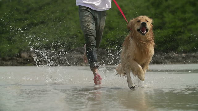 vídeos de stock e filmes b-roll de hd slow motion:young man and his dog running on the beach. - cão