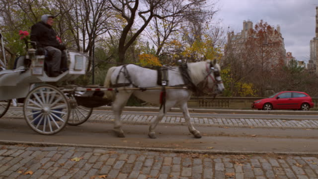 slow panning shot of horse drawn carrigaes in nyc - kutsche stock-videos und b-roll-filmmaterial