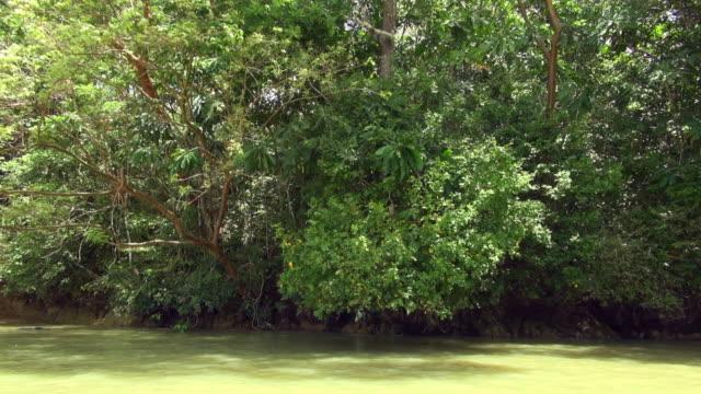 vídeos de stock e filmes b-roll de slow panning shot of panama canal mangrove - árvore tropical