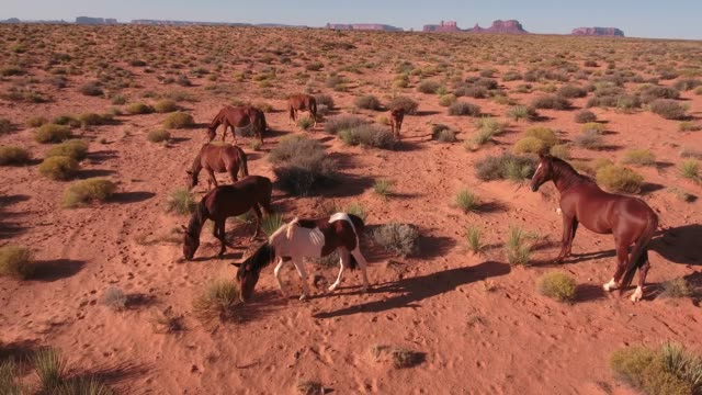 slow pull away and orbit around wild horses, drone aerial 4k, monument valley, valley of the gods, desert, cowboy, desolate, mustang, range, utah, nevada, arizona, gallup, paint horse .mov - paint horse stock videos & royalty-free footage