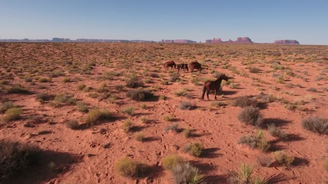 slow side tracking left to right wild horses, drone aerial 4k, monument valley, valley of the gods, desert, cowboy, desolate, mustang, range, utah, nevada, arizona, gallup, paint horse .mov - paint horse stock videos & royalty-free footage