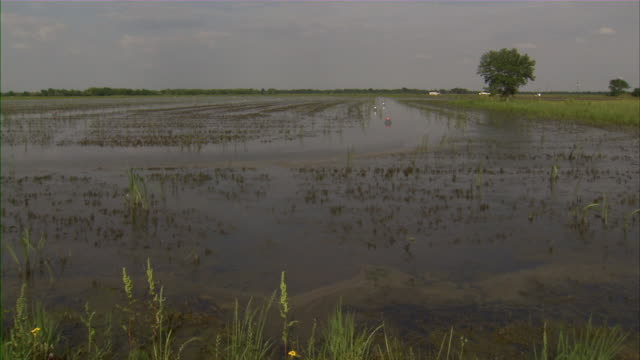 slow tilt-up shot of rice paddy. - rice paddy stock videos and b-roll footage