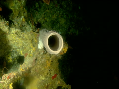 slow track over hollow sponge, cayman islands - cylinder stock videos & royalty-free footage