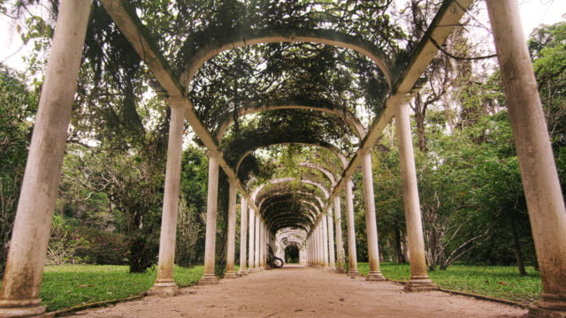 slow tracking shot directly in the middle of the walkway of the arches in jardim botanico in rio - botanical garden stock videos & royalty-free footage