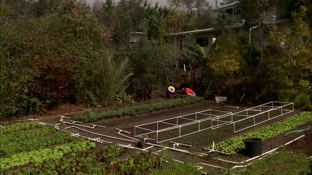 vídeos de stock, filmes e b-roll de slow zoom in on farmer working on crops. - árvore tropical