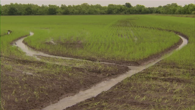 slow zoom out on rice paddy. - rice paddy stock videos and b-roll footage