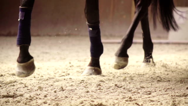 slow-mo: horse kicking sand while running - contestant stock videos & royalty-free footage