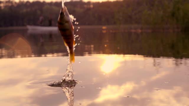 Langsam Mo: Springen Fische