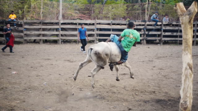 slowmo rodeo man riding a bull at latin america - bucking bronco stock videos & royalty-free footage