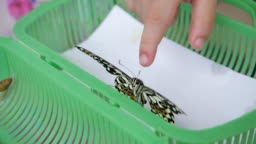 slow-motion, butterfly flying leave cage