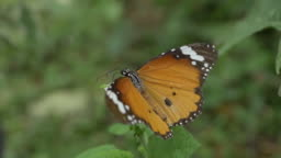 slow-motion, butterfly on beautiful flower