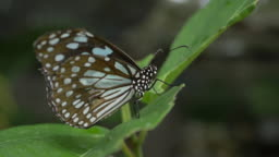 slow-motion, butterfly