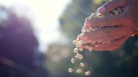 vídeos y material grabado en eventos de stock de lenta cerca mano echale semillas de café en el campo de la luz día. tamizado de granos de café por café campesino de secado de manos - bean
