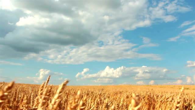 Slow-motion: Crane shot of blue sky, clouds and wheat field