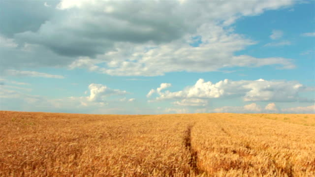 slow-motion: crane shot of blue sky, clouds and wheat field - crane shot stock videos & royalty-free footage