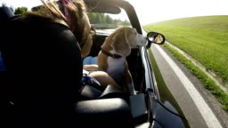Slow-motion footage of a beagle sitting on female's lap in the convertible.Travel with pets concept