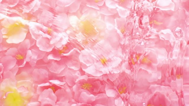 slowmotion movement of wave and ripples on water surface filled with submerged pink cherry blossom - conformity stock videos & royalty-free footage
