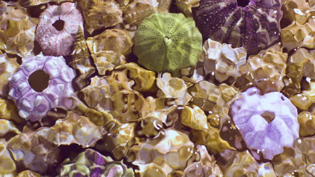 slowmotion movement of wave and ripples on water surface filled with submerged frog and coral shells - seashell stock videos & royalty-free footage