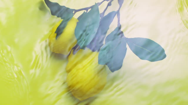 slowmotion movement of wave and ripples on water surface with a lemon tree, yellow background - citrus fruit stock videos and b-roll footage