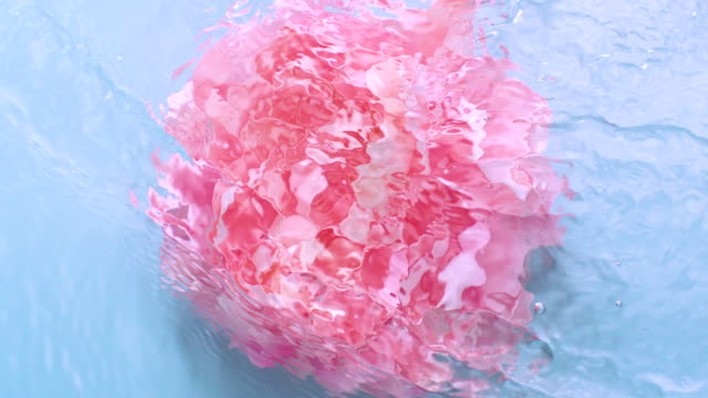 vídeos de stock, filmes e b-roll de slowmotion movement of wave and ripples on water surface with a submerged rotating peony head on blue background - feminidade