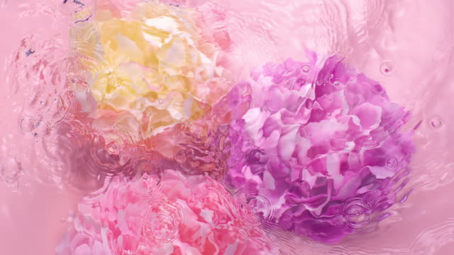 slowmotion movement of wave and ripples on water surface with three submerged rotating peony heads on pink background - bonding stock videos & royalty-free footage