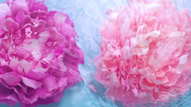 vídeos de stock e filmes b-roll de slowmotion movement of wave and ripples on water surface with two submerged rotating peony heads on blue background - cor de rosa