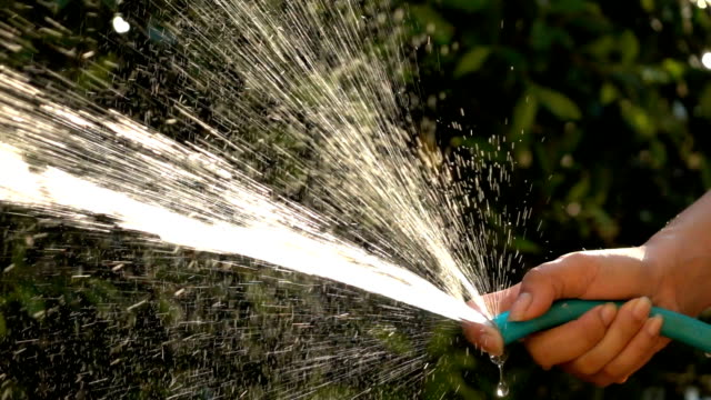 slow-motion, people watering tree in garden - squirting woman stock videos and b-roll footage