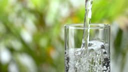 Slow-motion: Pouring water into a drinking glass on lush foliage leaf background.
