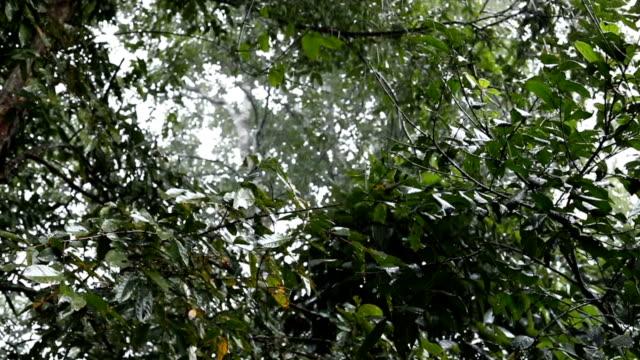 Zeitlupe, Regen im Regenwald