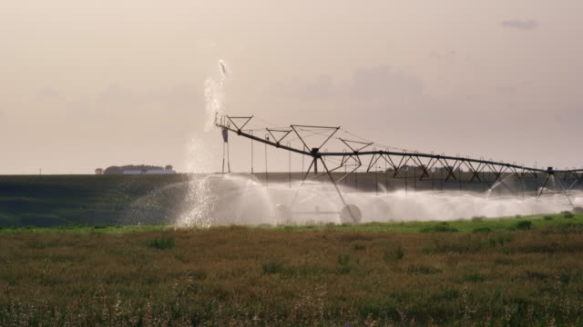 a slow-motion shot of a large-scale center-pivot spray irrigation system watering a field of rape (canola) on a farm in alberta, canada - irrigation equipment stock videos & royalty-free footage