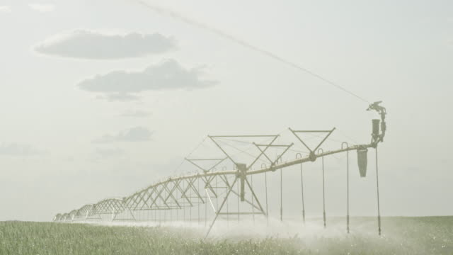 a slow-motion shot of a large-scale center-pivot spray irrigation system watering a field of rape (canola) on a sunny day in alberta, canada - sprinkler system stock videos & royalty-free footage