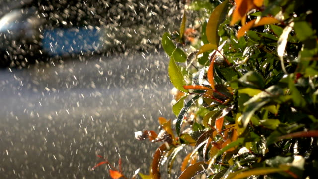 slow-motion, watering tree in garden
