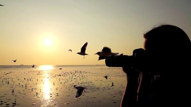 slow-motion: women take a photo seagull on the bridge - wildlife stock videos & royalty-free footage