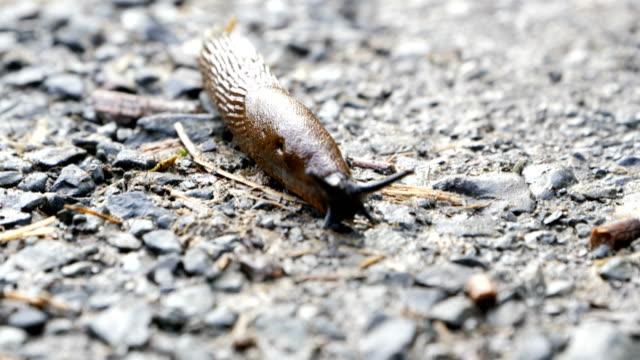 slug moving on the ground - slug stock videos and b-roll footage