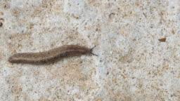 Slug on cement floor.