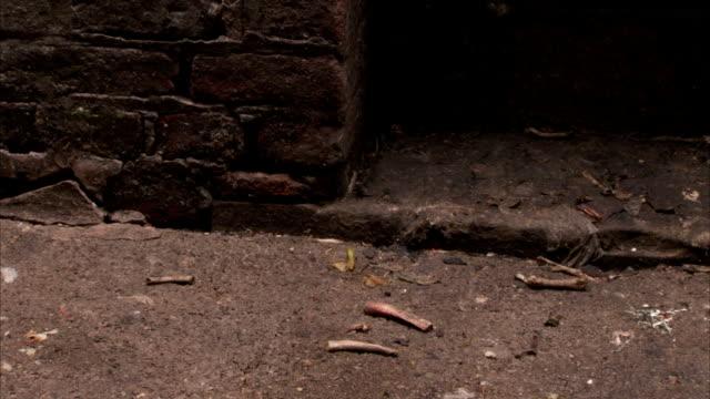 small animal bones litter an alley. available in hd. - 動物の骨点の映像素材/bロール
