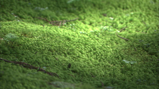 A small ant crawls across moss-covered ground.