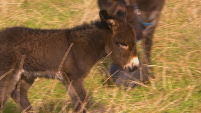 A small baby donkey on a field