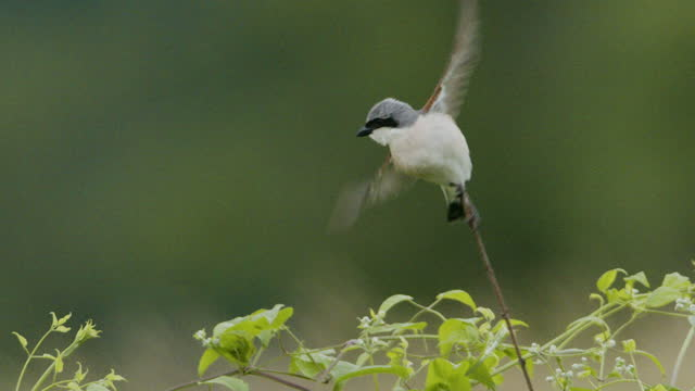small bird sitting on a branch and taking flight - small stock videos & royalty-free footage